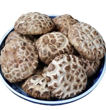 香菇 西华县东王营