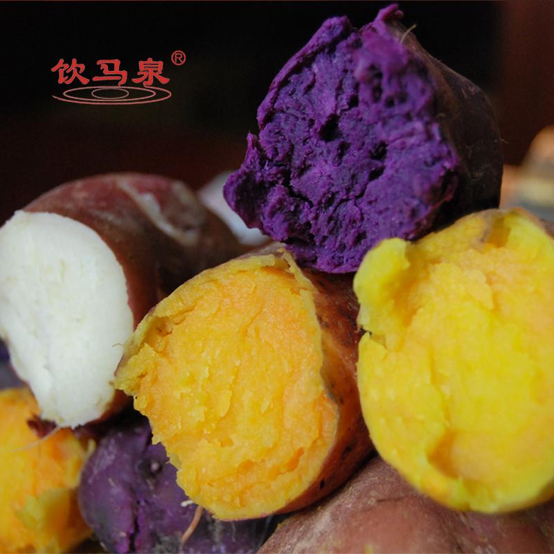 饮马泉 彩色红薯山芋多品种蒸煮烧烤地瓜好番薯新鲜 5斤包邮